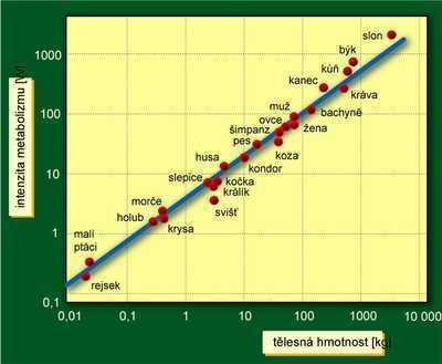 rychlost datování je ztráta časuseznamka indonésie zdarma