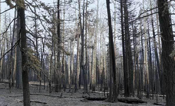 Věk stromů z uhlíku