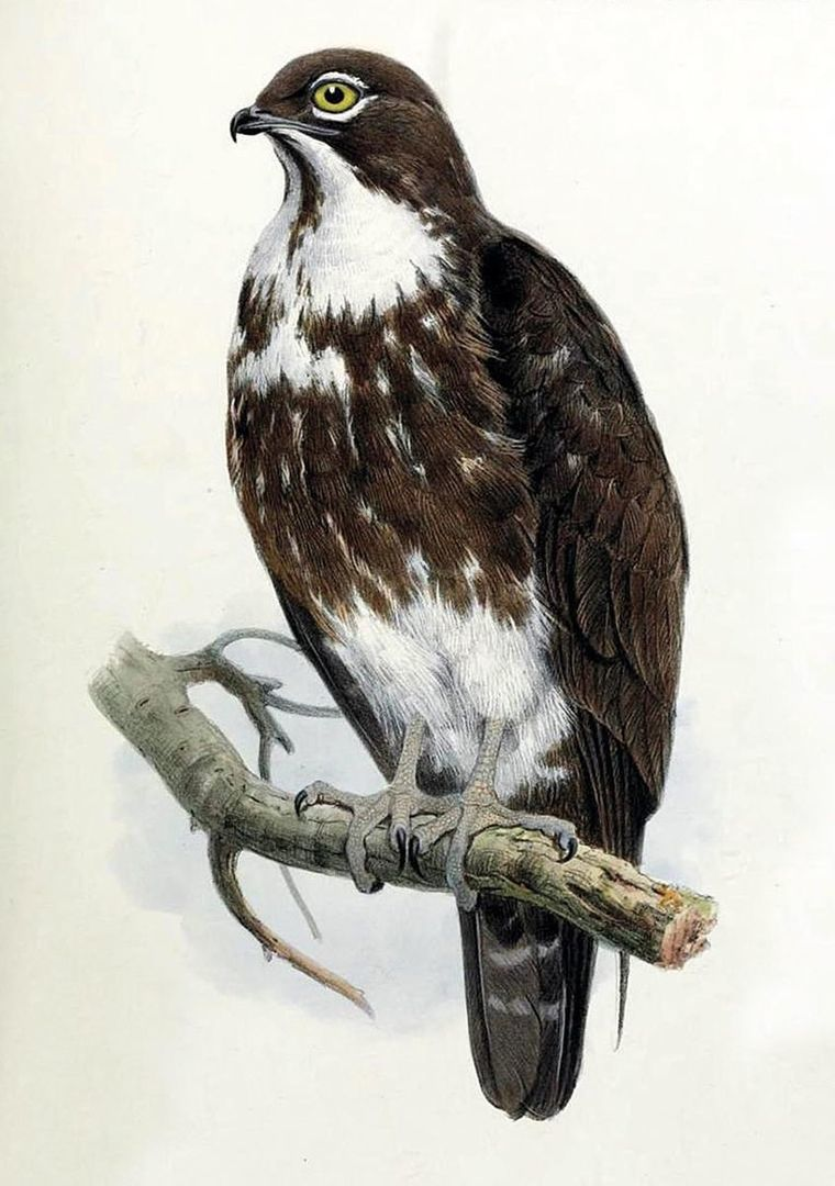 Amatérske vtáky