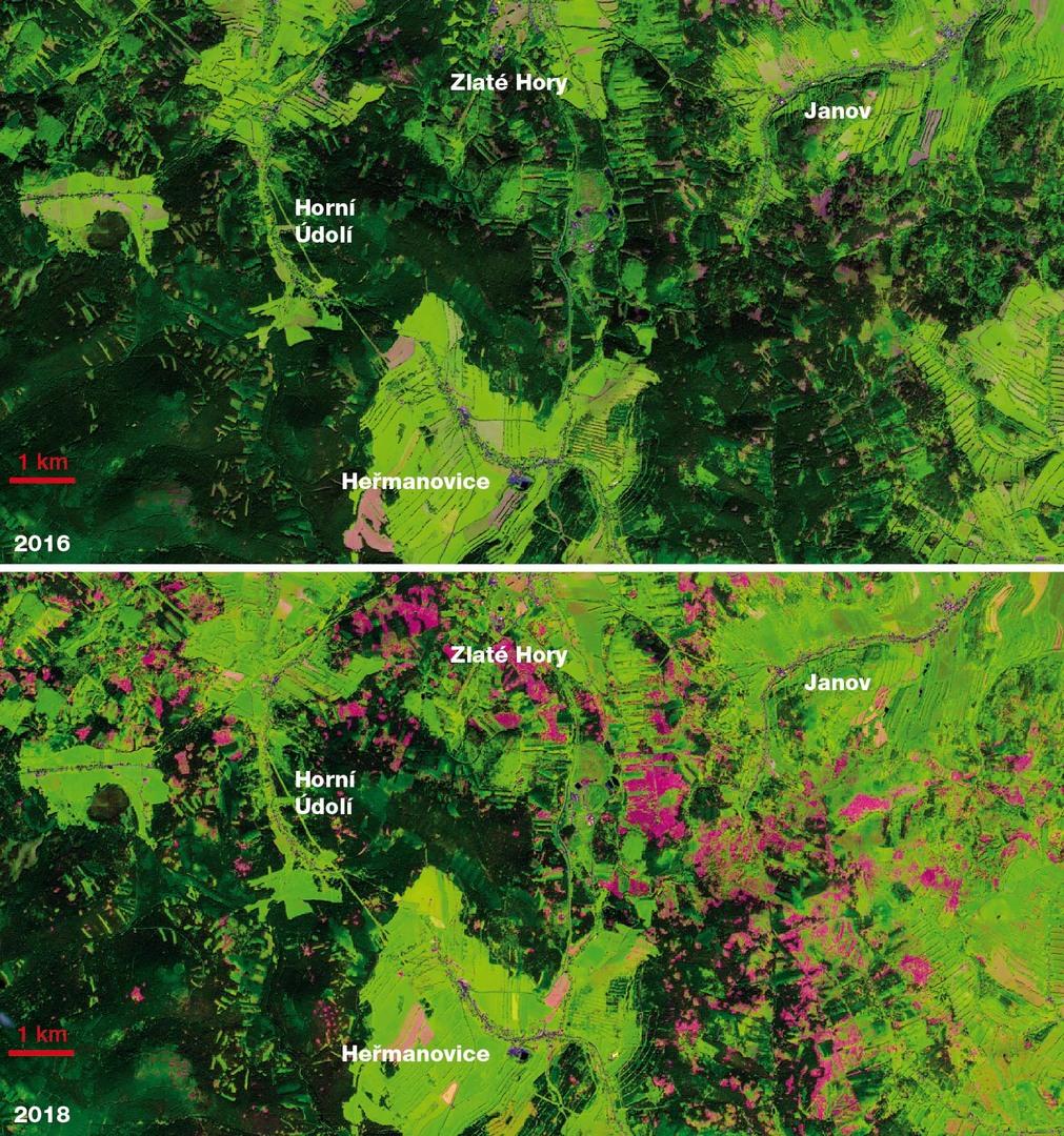 Obrázek 16: Kůrovcová kalamita v Jeseníkách mezi roky 2016 a 2018